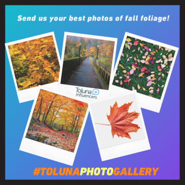 Autumn foliage - Oct Mag Toluna Photo Gallery